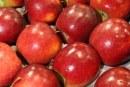 Jabłoń Story®: parchoodporna i jednokolorowa