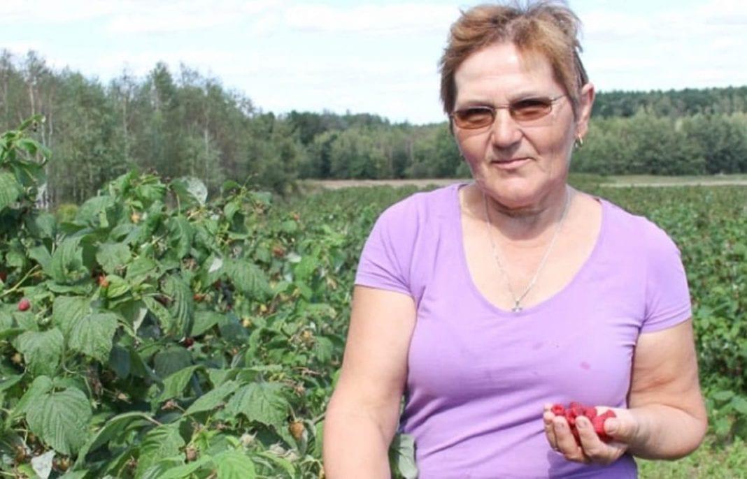 Fot. 1. Jadwiga Ścibisz od kilku lat zajmuje się produkcją ekologicznych malin i truskawek