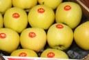 Yello® – nowa marka jabłek