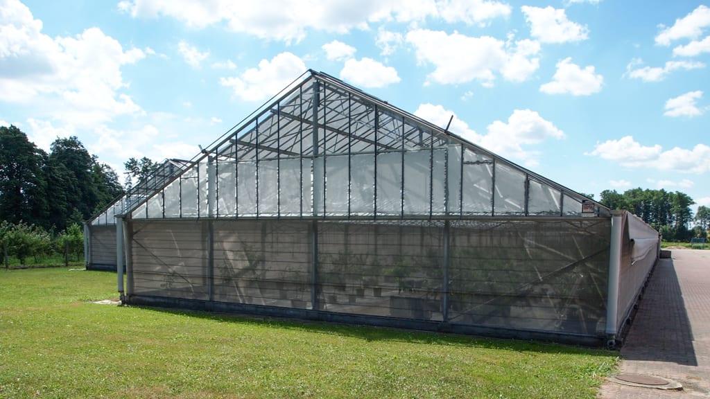 Zadania szkółkarzy IO – utrzymywanie zdrowej kolekcji, testowanie roślin