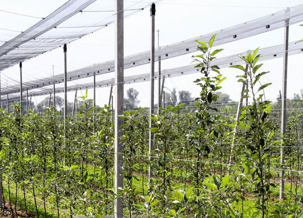 Do ochrony sadów przed gradem: siatki, stoły, konstrukcje