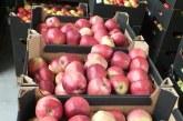 W tym roku wyeksportujemy ponad milion ton jabłek
