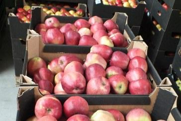 Na jakich zasadach produkcja jabłek na chiński rynek w 2017 r.?