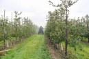 Co można, a czego już nie w ochronie drzew owocowych