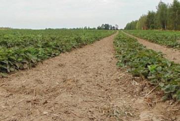 Jak przebiega kontrola i certyfikacja w rolnictwie ekologicznym?