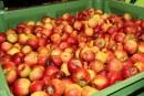 Rośnie produkcja i popularność octu jabłkowego