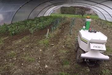 Film – robot OZ w trakcie pracy