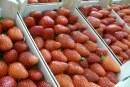Niespodziewanie duże zbiory truskawek. Markety robią promocje