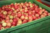 Stan zapasów jabłek deserowych we Włoszech na dzień 1 marca