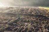 Próchnica glebowa niezbędna dla wzrostu i rozwoju roślin