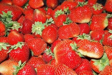 Włoski rynek truskawki