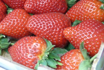 Rośnie spożycie truskawek w państwach Unii Europejskiej