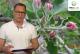 Komunikat sadowniczy – zalecenia PROCAM z 10.05.2017