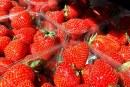 Większe zbiory truskawek na Wyspach Brytyjskich