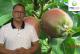 Komunikat sadowniczy PROCAM z 21.06.2017