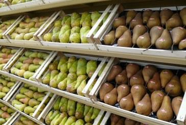 Jakie będą zbiory gruszek na świecie wg prognoz USDA?