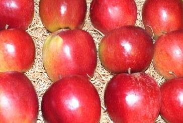 Polacy spożywają coraz mniej jabłek