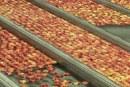 Jaka będzie produkcja jabłek na świecie? Są już prognozy USDA