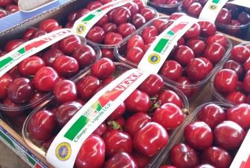 Ciliegia di Vignola. Co kryje się za najbardziej znaną marką czereśni?