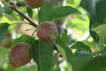 Spacerem po sadzie (6)