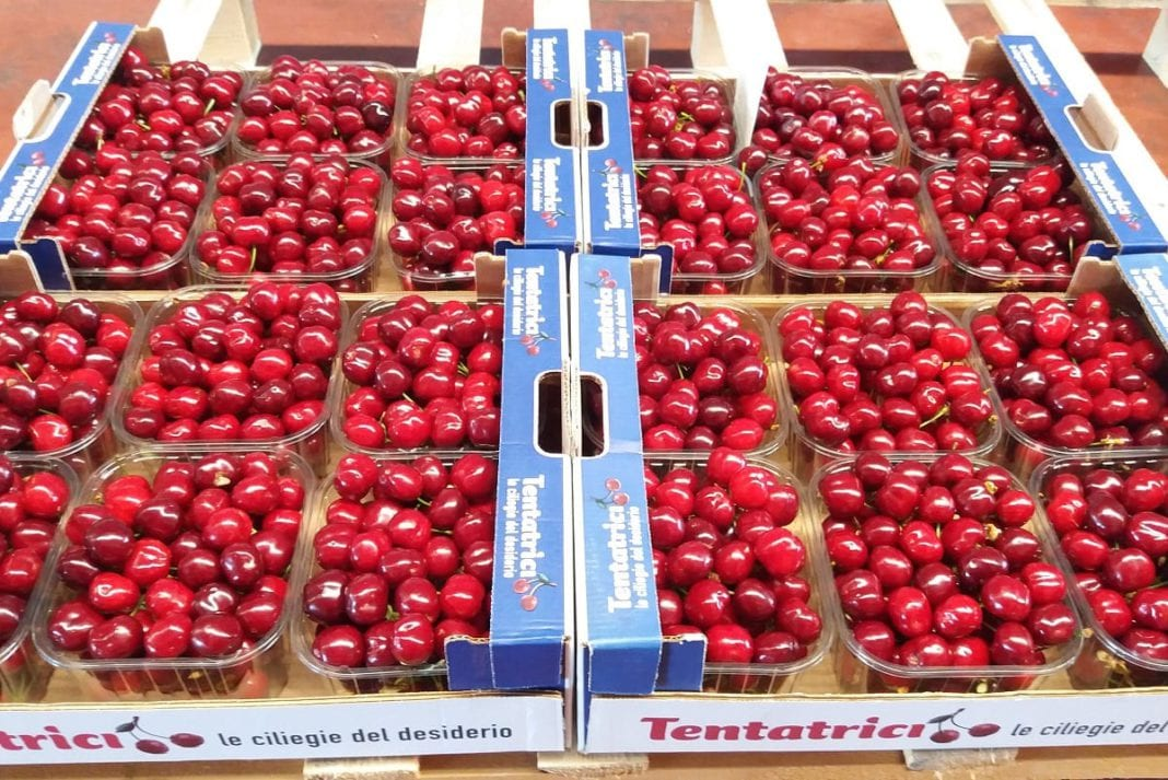 Konsorcjum zrzeszające producentów czereśni. Wyzwania isukcesy