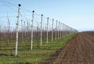 FOT. 1. W rejonie Kaukazu Północnego przeważają duże gospodarstwa sadownicze