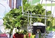FOT. 2. Rynny KG marki FormFlex do uprawy truskawek deserowych pod osłonami