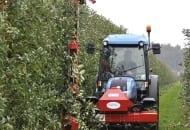 FOT. 2. Po zbiorze jabłek drzewa tnie się mechanicznie, gdy są na nich jeszcze liście