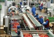 Fot. 2. Linia do pakowania jabłek na tacki zakończona maszyną zabezpieczającą je folią