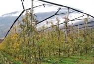 Fot. 3. Gospodarstwo i sady w Plars położone są na wysokości 500 m n.p.m. Sad zabezpieczony jest przed gradem systemem Wiesel