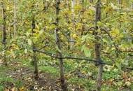 Fot. 4. Linie do nawadniania umieszczone są 30–40 cm nad glebą