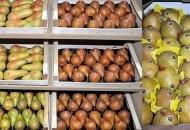 Fot. 6. Do produkcji trafia coraz więcej odmian o atrakcyjnym ordzawieniu owoców, czy kształcie