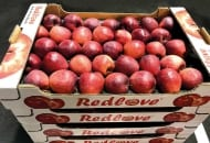 Redlove® – odmiana o czerwonym miąższu