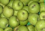FOT. 2. Jabłka ukraińskiej odmiany 'Renet Simirenko' można uprawiać w Polsce, o ile znajdzie się nabywcę owoców