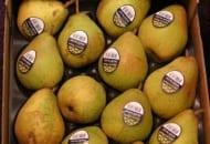 Fot. 8. Dojrzałe, żółte owoce – takich gruszek chce większość ankietowanych klientów