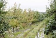 Fot. 1. Nawożenie sadów po trudnych sezonach