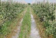 1-2012-nawozenie-sadow-po-trudnych-sezonach-3.jpg
