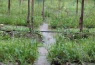 Fot. 4a. Erozja wodna