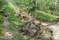1-2012-nawozenie-sadow-po-trudnych-sezonach-4b.jpg