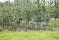 Fot. 5. Zastoisko wodne po ulewnym deszczu w lipcu 2011 r.