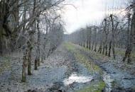 1-2012-nawozenie-sadow-po-trudnych-sezonach-6a.jpg