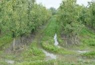 1-2012-nawozenie-sadow-po-trudnych-sezonach-6b.jpg