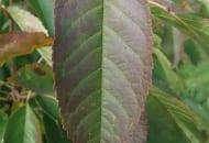 1-2012-zasady-zasilania-drzew-owocowych-2a.jpg