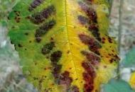 1-2012-zasady-zasilania-drzew-owocowych-4c.jpg