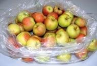 FOT. 6b. Przechowywanie jabłek w workach Xtend®