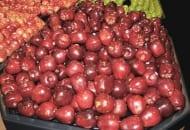 FOT. 7. Woskowane i wypolerowane jabłka