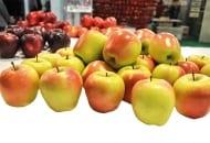 FOT. 2b. ... oraz jej owoce wyprodukowane we Włoszech i oferowane pod nazwą Gold Chief®