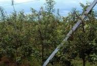 Fot. 10. W sadzie Józefa Garlickiego drut podtrzymują betonowe słupki rozstawione co 20 m