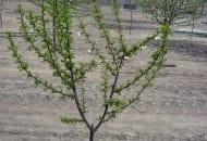 Fot. 5a. Przykłady źle prowadzonych drzew