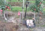 FOT. 2. Wykopany w pasie herbicydowym dołek do pobrania gleby z warstwy ornej